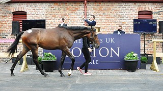 Solid results second time around for the Yorton Sale
