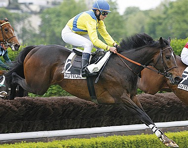 Saint Goustan Blue flies the flag for Blue Bresil at Auteuil
