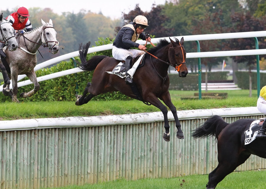 - Easysland by Gentlewave, multiple winner including the listed Grand Steeple Chase-Cross-Country de Compiegne