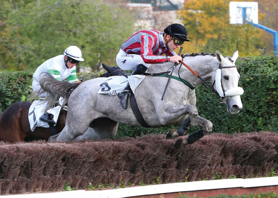 - Floridee by Masterstroke, winner of the grade 3 Prix bournosienne at auteuil