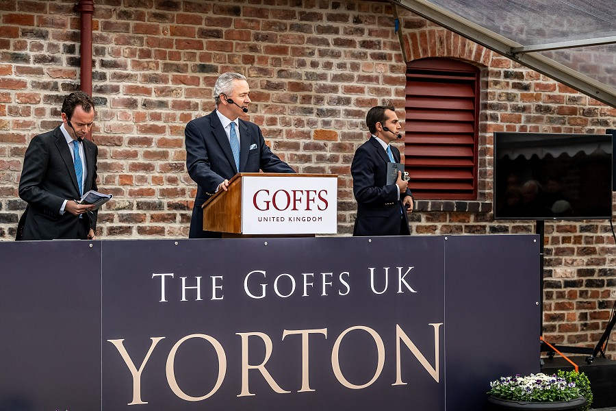 Yorton Sale Report - Carl Evans, EBN 13th Sep 2019