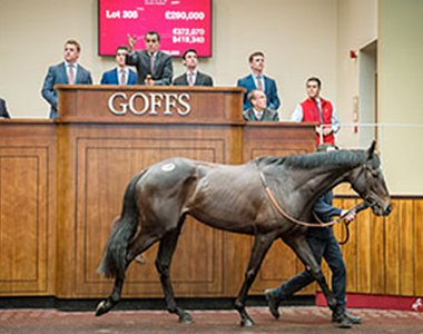 Le Prezien (Blue Bresil) lights up Goffs UK HIT Spring Sale