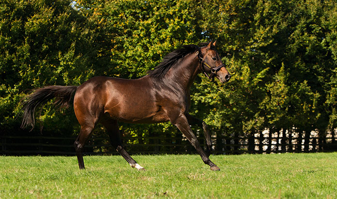 Masterstroke joins Yorton Farm Stud roster