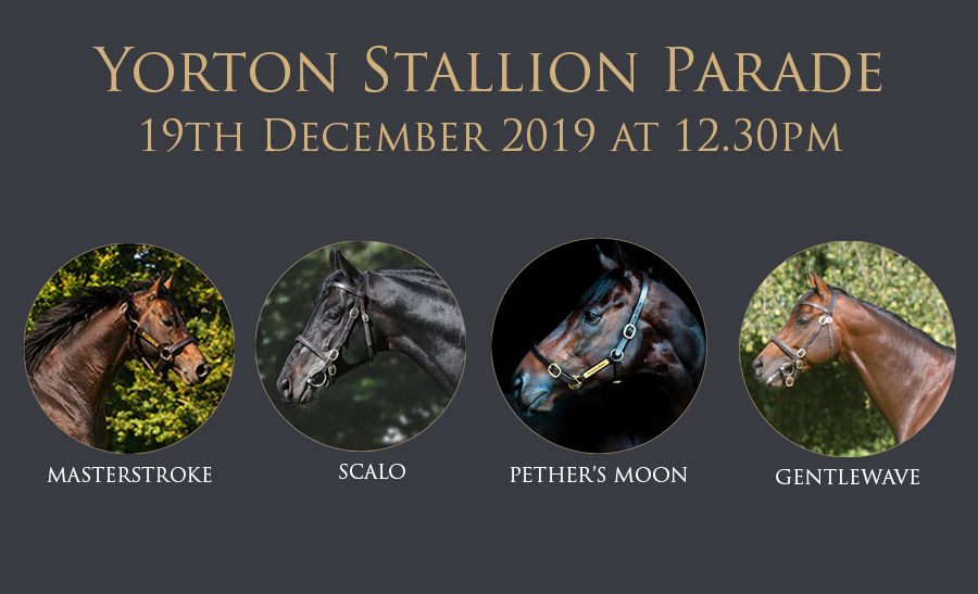 Yorton Stallion and Youngstock Parade - Thursday 19th December