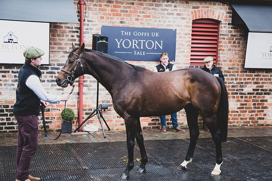 A warm welcome in Wales as Yorton Farm's replenished roster goes on parade - Racing Post